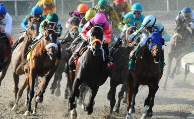 Horse Betting Strategies for Newbies